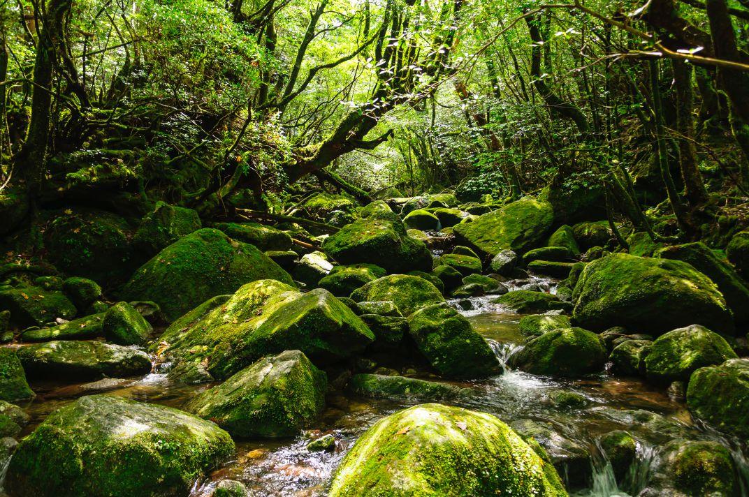 白谷雲水峡 ~苔むす森の先からの絶景~